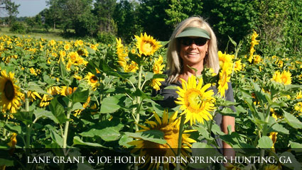 Tall and healthy sunflower garden thanks to Milorganite's use aas a deer repellent.