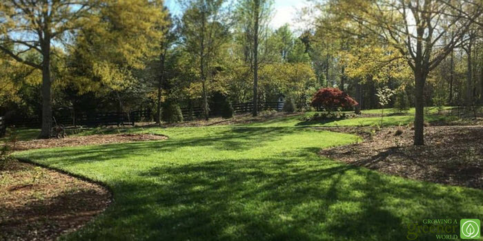 Spring lawn and landscape