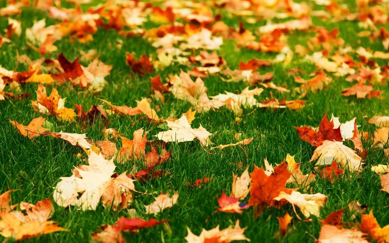 orange fall leaves on grass