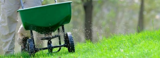 A man using a spreader to put down organic fertilizer on green, healthy grass.