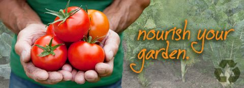 A man holding healthy, bright-red tomatoes. Nourish your garden with Milorganite fertilizer.