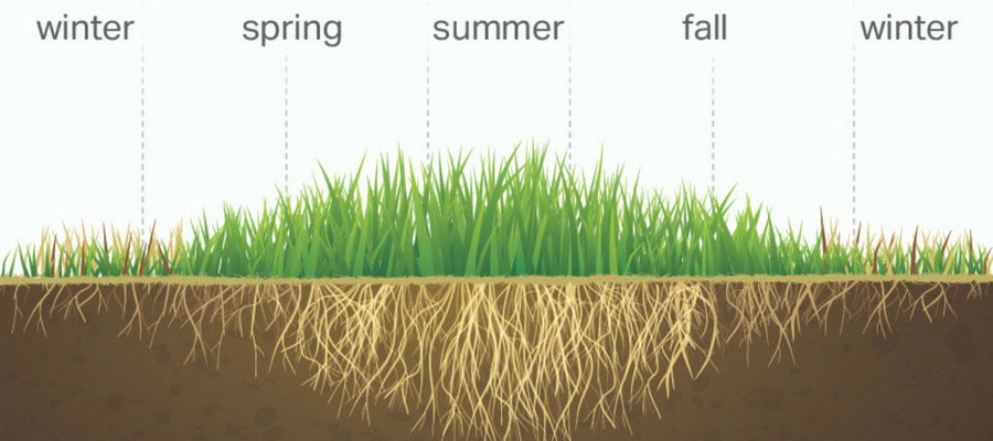 Warm Season grass through the seasons