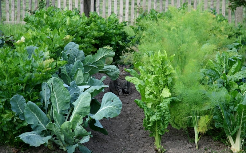 A healthy vegetable garden using appropriate Milorganite fertilizer application rates.