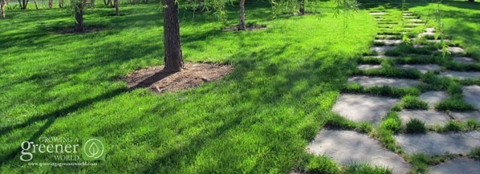 Organic green lawn fertilized with Milorganite fertilizer.
