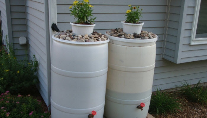 Rain Barrels for a home garden