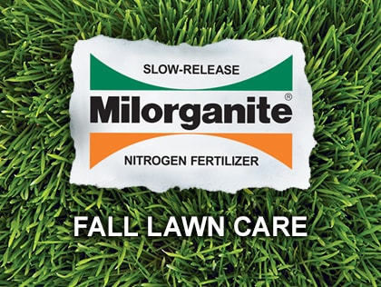 Fall Lawn Care Video