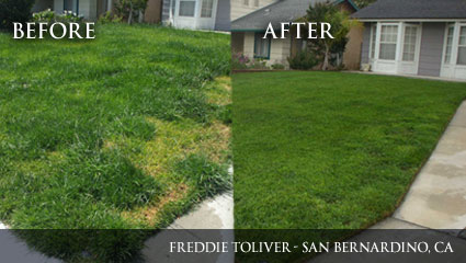 Before-and-after evidence of Milorganite's ability to greate healthy green grass.