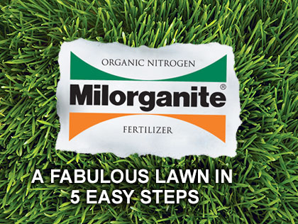 How to Get a Fabulous Lawn in 5 Easy Steps