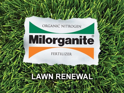 This video explains lawn renewal and renovation.
