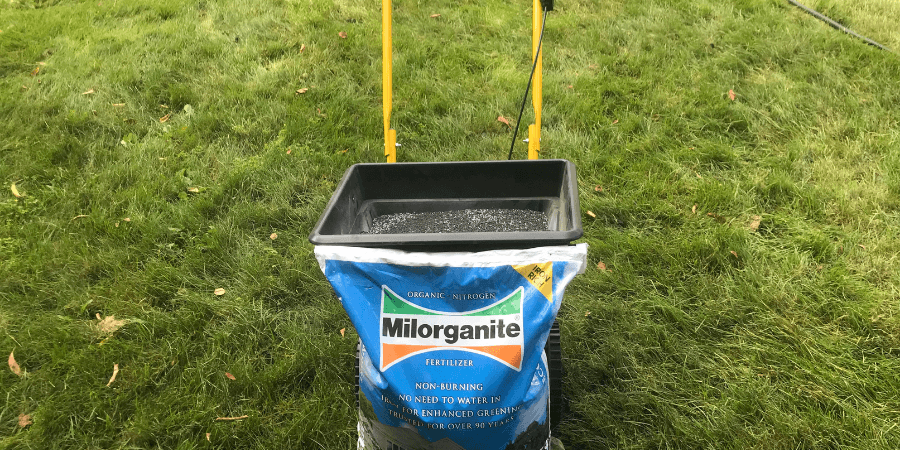 Overseeding and Fertilizing with Milorganite in Fall
