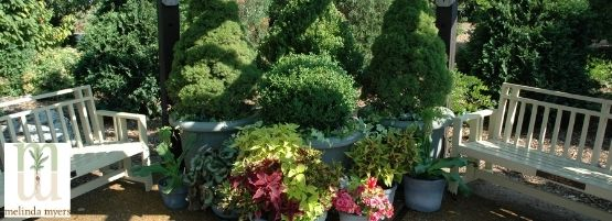 MM_Tree_Shrub_Container_Thumbnail555x201-min.jpg