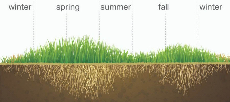 Cool-season Grass Growth Cycle Through the Seasons