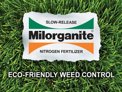 Eco-Friendly Weed Control in the Lawn