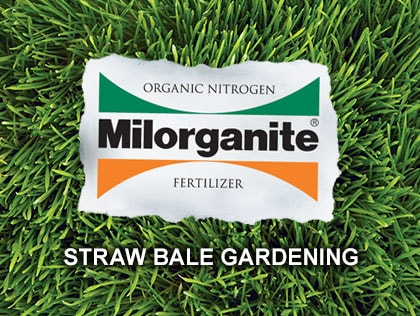 How to Condition and Plant a Straw Bale Garden