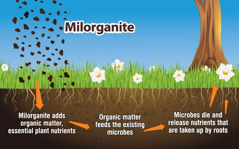 Using Milorganite Fertilizer In Your Lawn And Garden