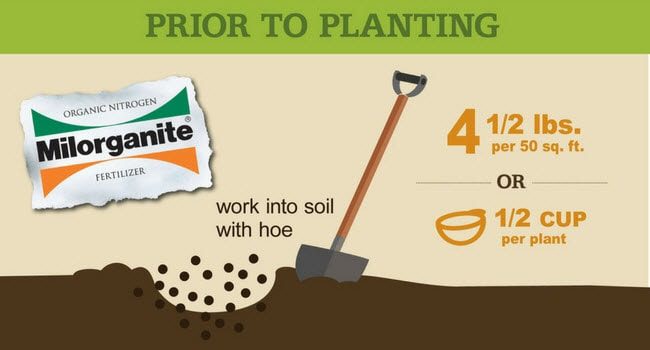 Fertilizing your Vegetable Garden with Milorganite | Milorganite