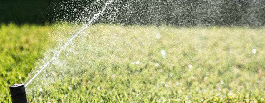 Watering the Lawn in Summer