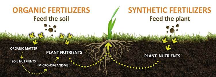 Illustration of organic and synthetic fertilizers feeding the soil vs the plant and how the nutrients get to the roots