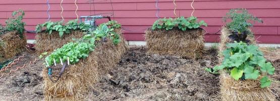 Build A Straw Bale Garden Milorganite