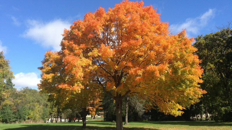 Tree with fall leave colors