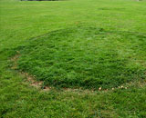 Green grass with brown ring around it, known as Fairy Ring. Fertilizing Propery with Milorganite helps treat this lawn disease.