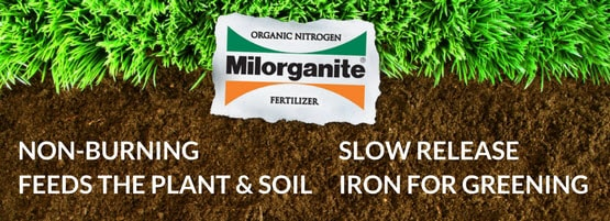 Milorganite fertilizer is made from organic nitrogen, has a slow release, and feeds for up to ten weeks.