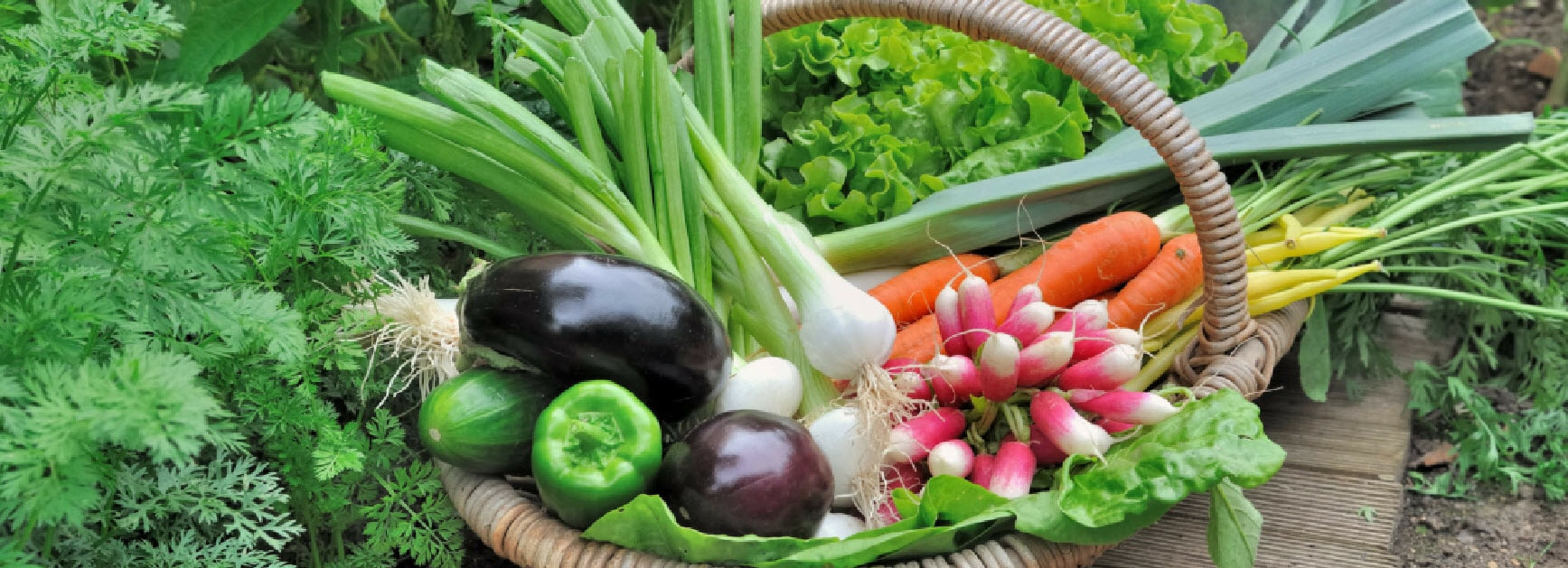 basketveggies555x201-min.jpg