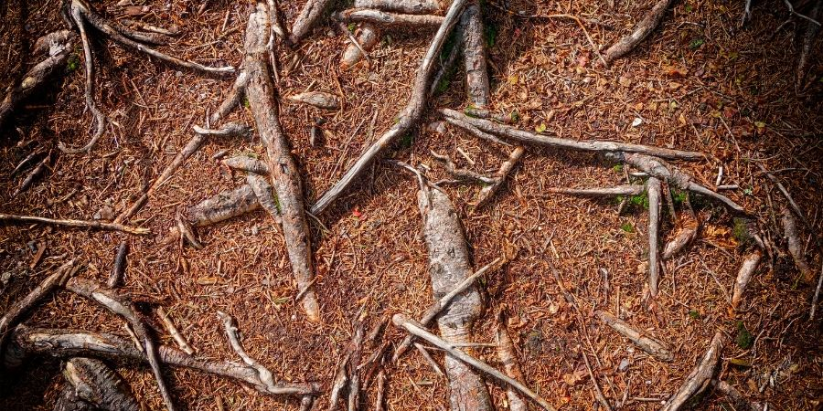 tree roots in soil