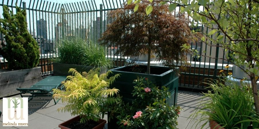 Rooftop Tree and Shrub Container Garden