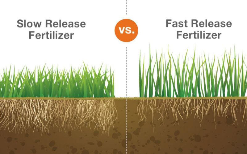 graphic showing slow release fertilizer provides deeper grass roots than fast release fertilizer