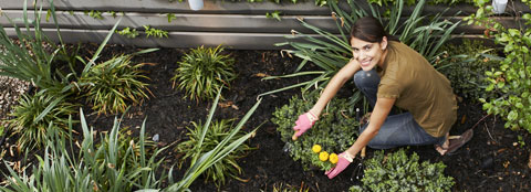 A woman working in her garden and dividing perennials.