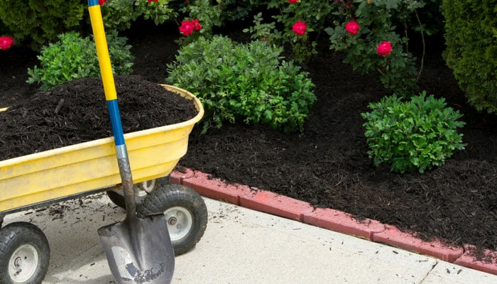Adding mulch to a garden bed