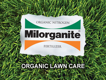 Organic Lawn in Five Steps