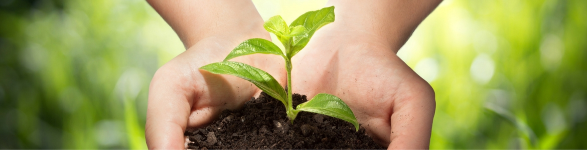 Hands holding green plant and dirt.
