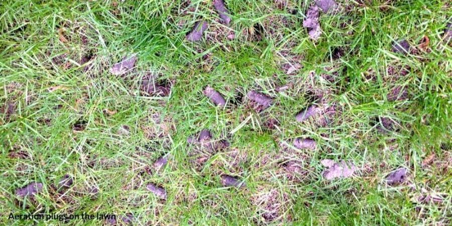aeration plugs in the lawn