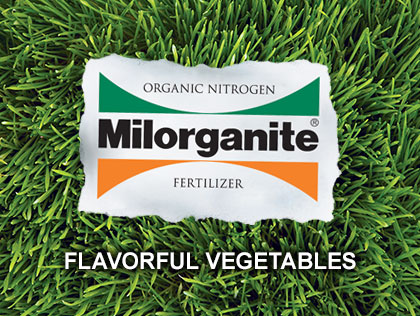 Horticulture expert Melinda Myers explains how to have Flavorful Vegetables in 5 Easy Steps.