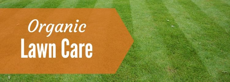 Organic lawn care with a striped green lawn