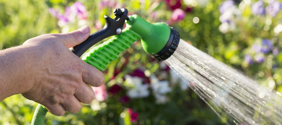 Watering a Garden with a Hose