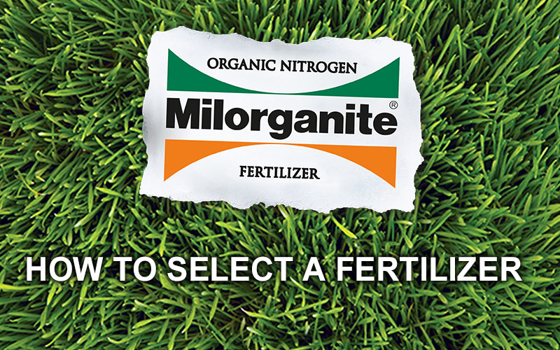 Learn how to select a fertilizer and the difference between organic and synthetic fertilizer.